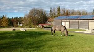 Ludwig ist nun alt genug um alleine grasen gehen zu können!