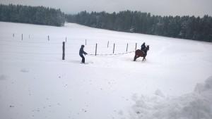 Skijöring 2